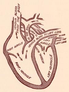 stockvault-human-heart-blood-circulation-circa-191148440
