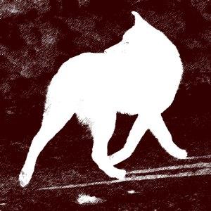 stockvault-dog-running128917